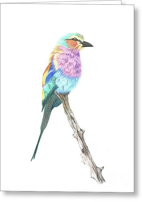 Lilac Breasted Roller Greeting Card by Cindy Skidgel