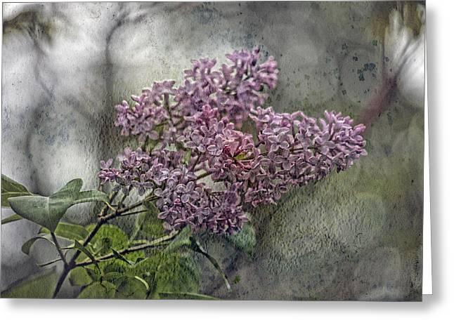 Lilac Echo Greeting Card by Bonnie Bruno