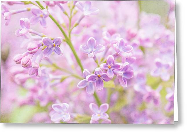 Lilac Flowers Mist Greeting Card by Alexander Senin