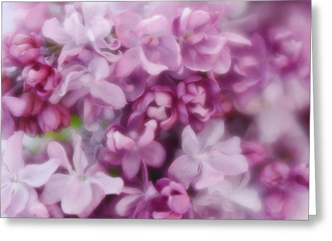 Greeting Card featuring the photograph Lilac - Lavender by Diane Alexander