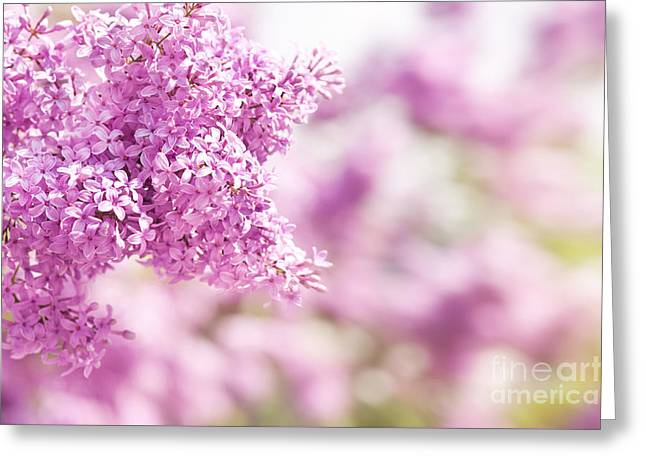 Lilac Vibrant Pink Inflorescence Greeting Card by Arletta Cwalina