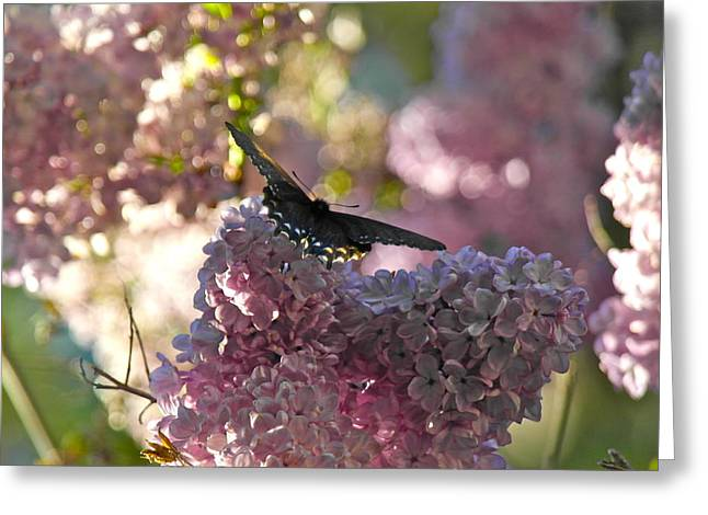 Lilac World Greeting Card