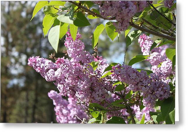 Greeting Card featuring the photograph Lilacs 5545 by Antonio Romero