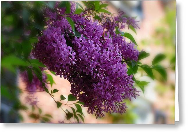 Lilacs Greeting Card by Elaine Manley