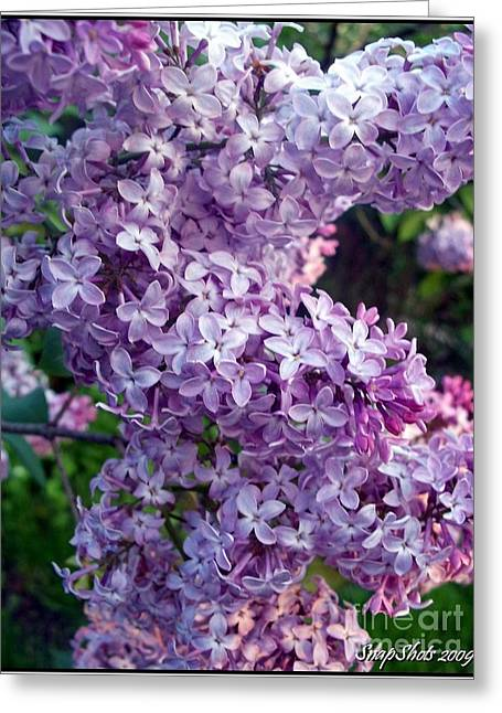Lilacs Greeting Card by Emily Kelley