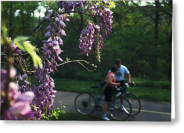 Lilacs In Bloom Greeting Card by Carl Purcell