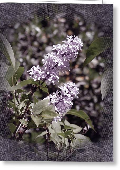 Lilacs In Lace Greeting Card