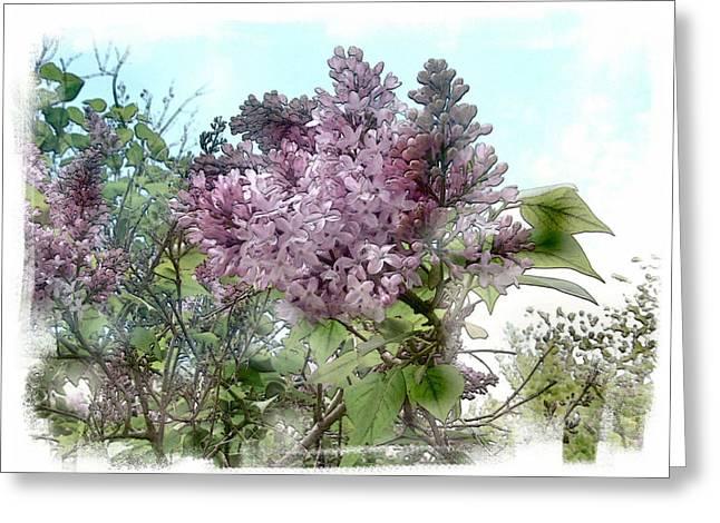 Lilacs  Lusty Dreams Greeting Card