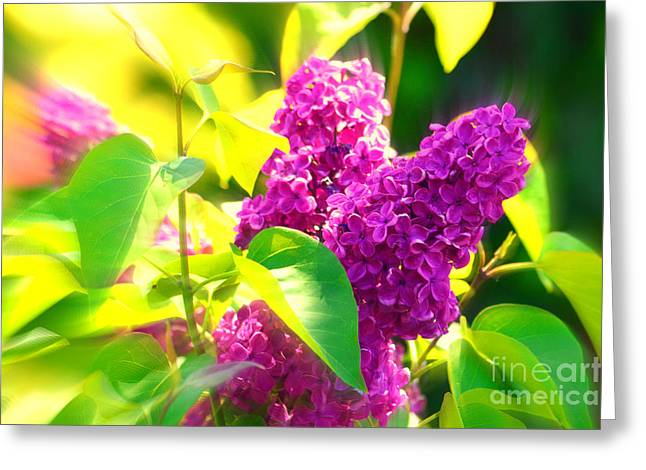 Greeting Card featuring the photograph Lilacs by Susanne Van Hulst