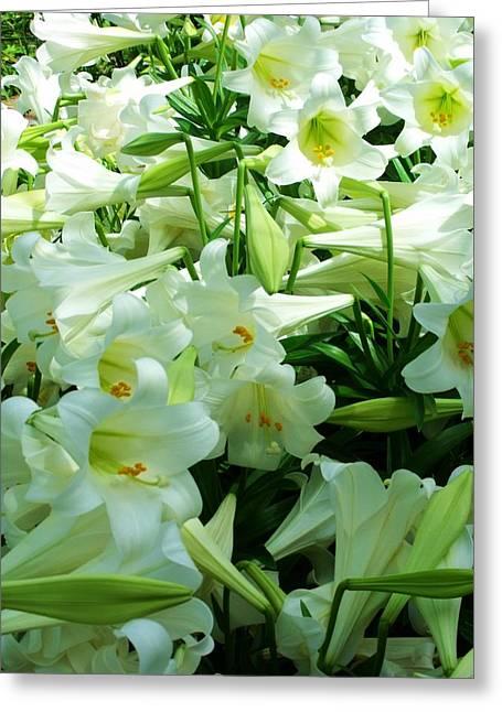 Lilies 11 Greeting Card by Anna Villarreal Garbis