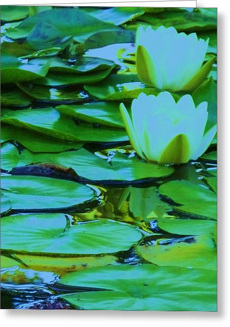 Lilies 20 Greeting Card by Eric  Schiabor