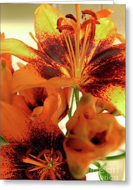 Lilies Celebration Greeting Card by Jasna Dragun