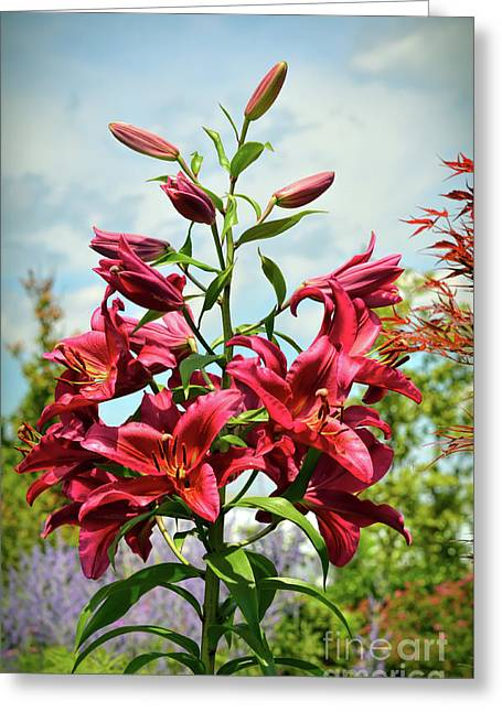 Greeting Card featuring the photograph Lilies In The Garden by Kerri Farley