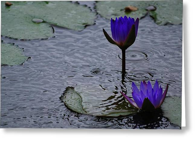 Greeting Card featuring the photograph Lilies In The Rain by Amee Cave