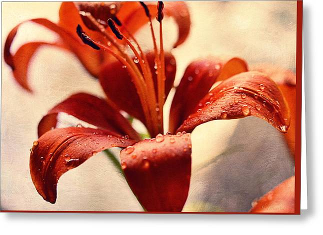 Lilies In The Shadow  Greeting Card by Maria Angelica Maira