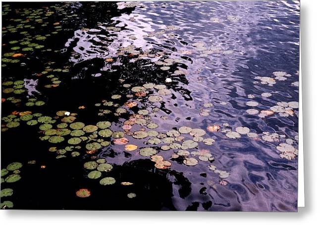 Greeting Card featuring the photograph Lilies In The Water by Lyle Crump