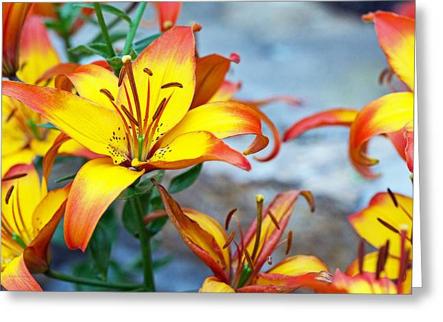 Lilies Of The Field #1 Greeting Card