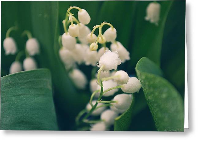 Lilies Of The Valley Greeting Card by Marija Djedovic