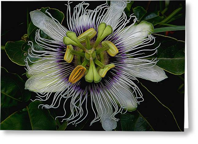 Lilikoi Passion Fruit Greeting Card