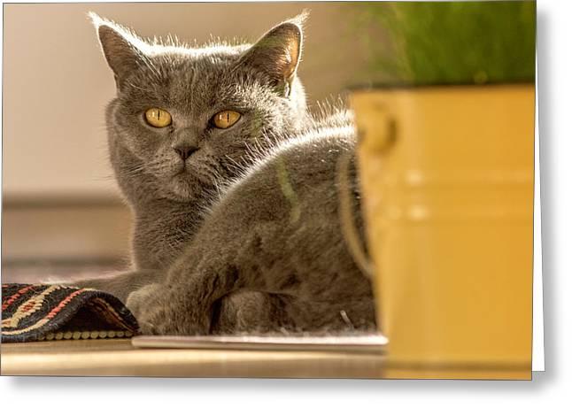 Lilli The Cat Greeting Card