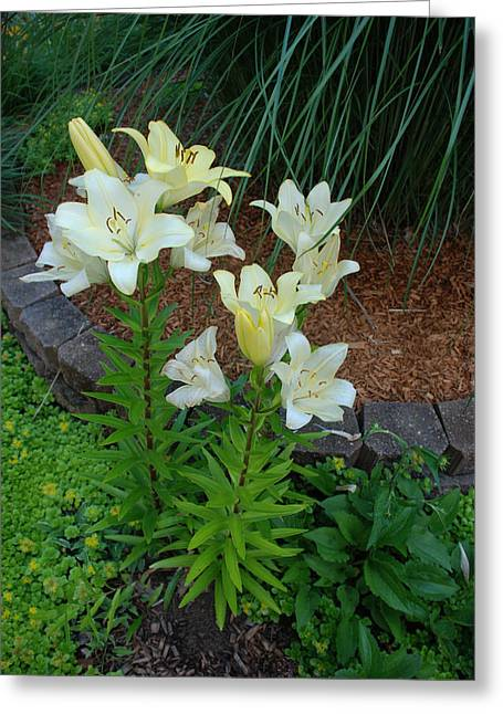Greeting Card featuring the photograph Lillies by Ferrel Cordle