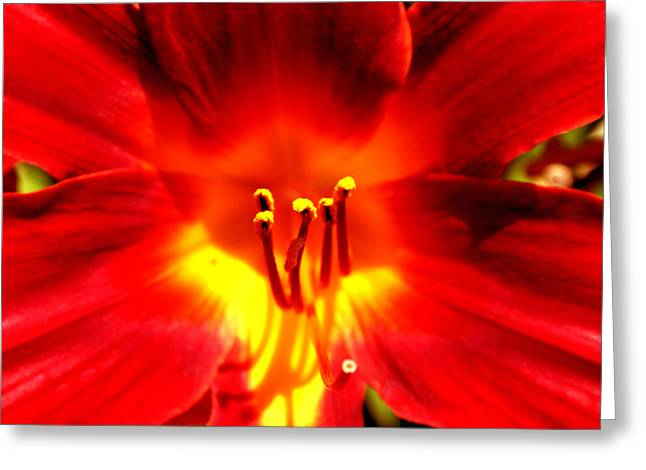Lilly A Flame Greeting Card by Trish Jenkins