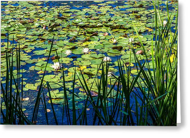Lilly Pad Pond Greeting Card