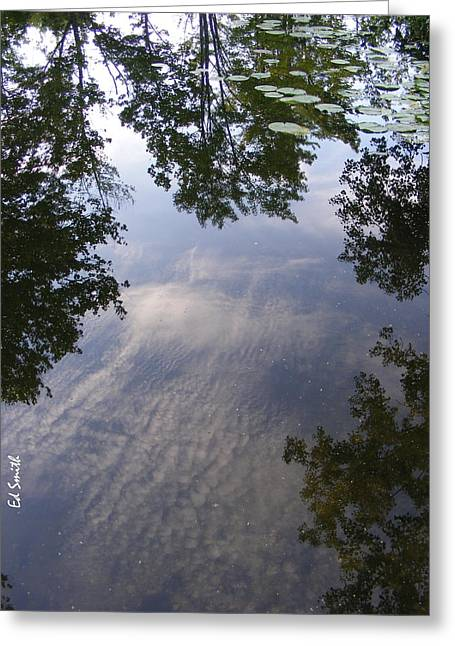 Lilly Pad Reflections Greeting Card by Ed Smith