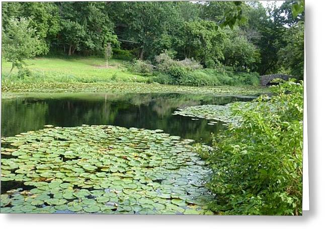 Lilly Pond 1 Greeting Card by Howard Rose