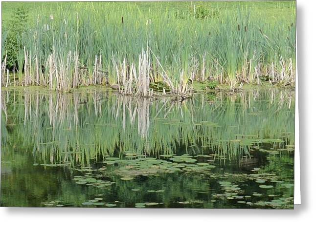 Lilly Pond 2 Greeting Card by Howard Rose