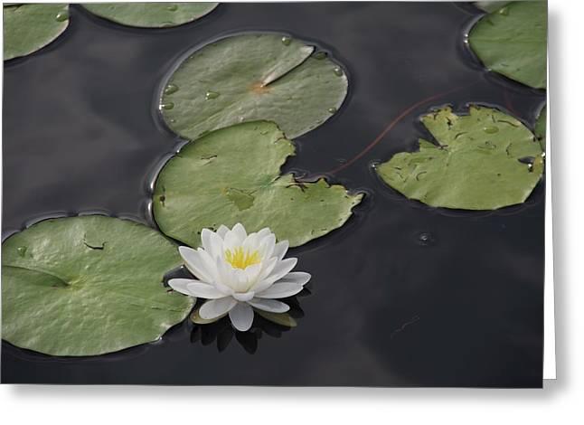 Buddhist Symbol  Greeting Card