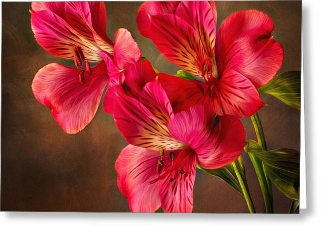 Lilly With Brushstrokes Greeting Card by Mary Jo Allen
