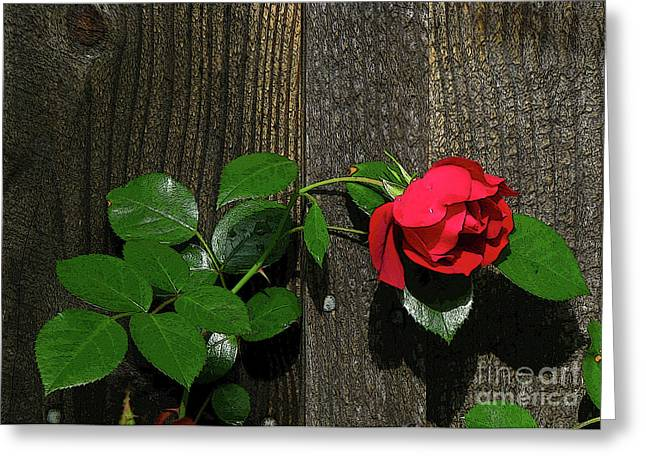 Greeting Card featuring the photograph Lilting Rose by Deborah Johnson