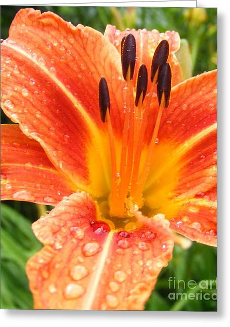 Greeting Card featuring the photograph Lily After The Rain by Lila Fisher-Wenzel