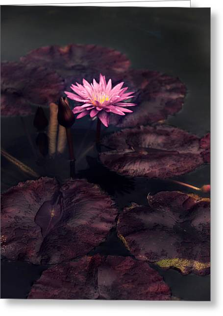 Moonlight Lily Greeting Card by Jessica Jenney