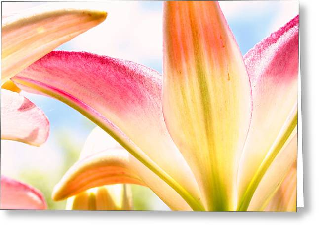 Steve Augustin Greeting Cards - Lily and Clouds Greeting Card by Steve Augustin