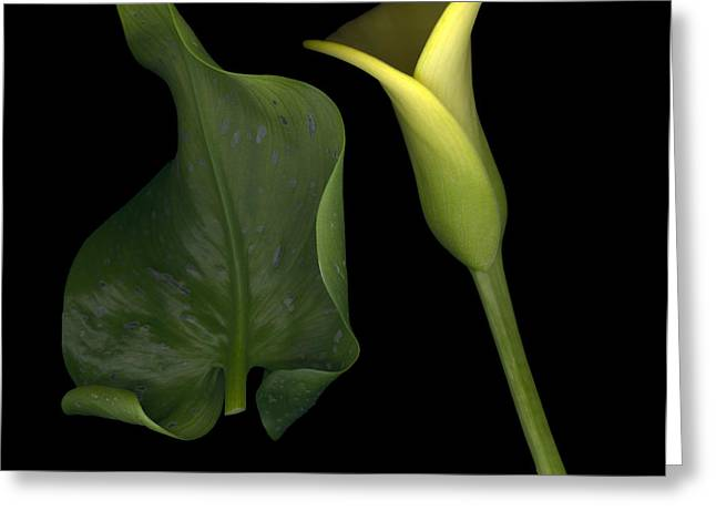 Lily And Leaf Number Two Greeting Card by Heather Kirk