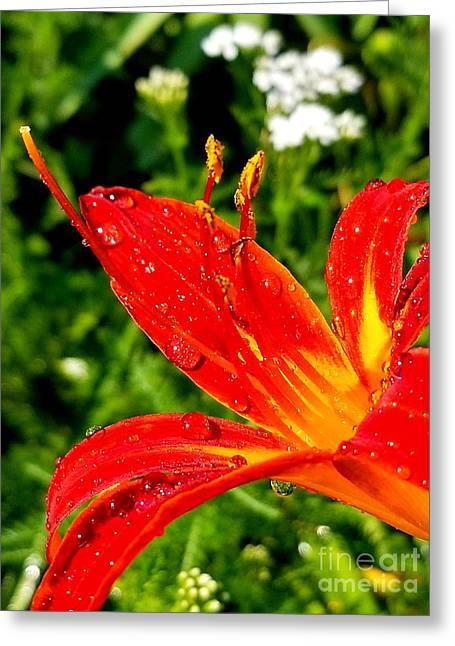 Lily And Raindrops Greeting Card