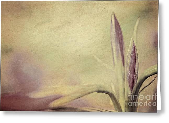 Lily Art Greeting Card by Kim Henderson