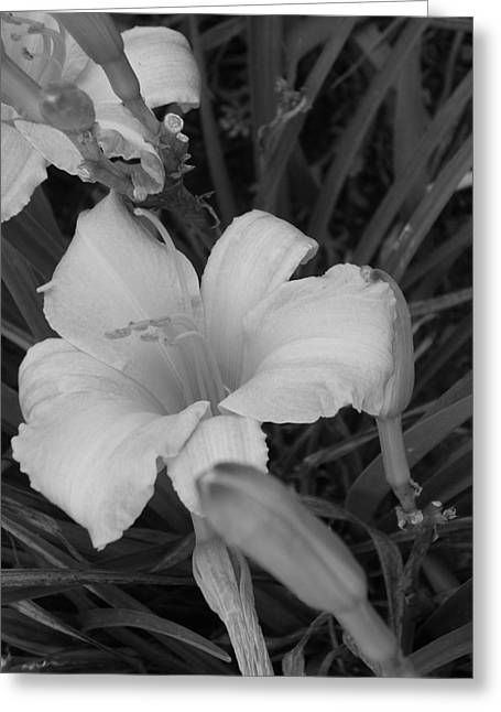 Lily Greeting Card by Audrey Venute