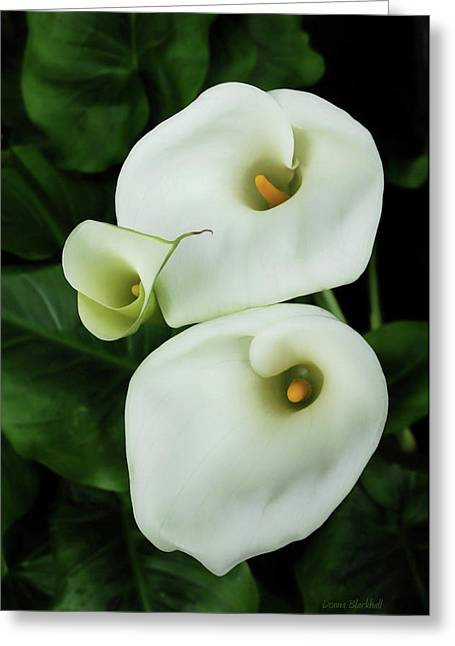 Calla Lily Greeting Cards - Lily Family Greeting Card by Donna Blackhall