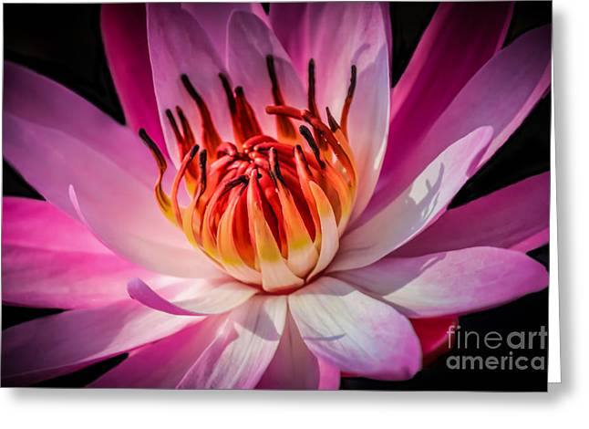 Lily Fire 2 Greeting Card by Liesl Walsh