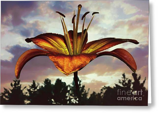 Lily In The Morning Greeting Card by Mim White