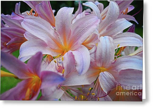 Lily Lavender Closeup Greeting Card