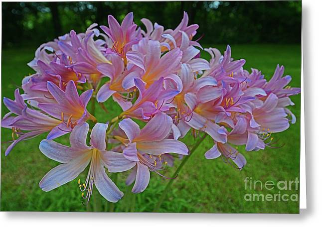 Lily Lavender Greeting Card