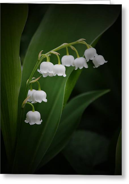 Lily Of The Valley 2 Greeting Card
