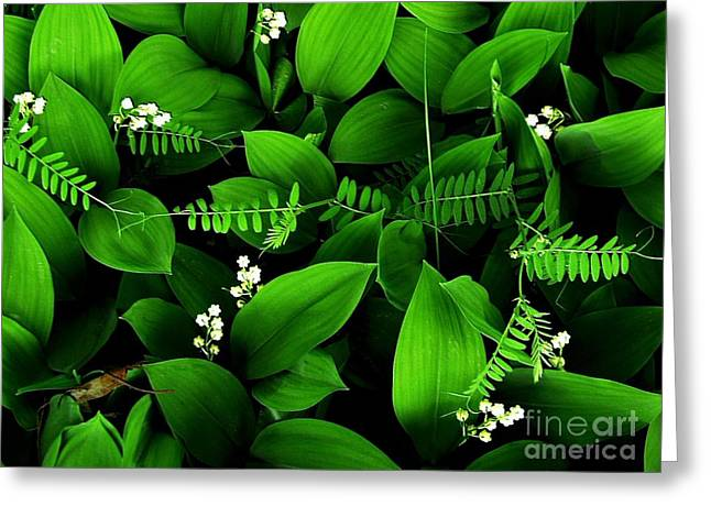 Lily Of The Valley Greeting Card by Elfriede Fulda