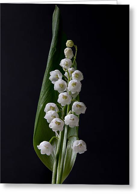 Lily Of The Valley On Black Greeting Card