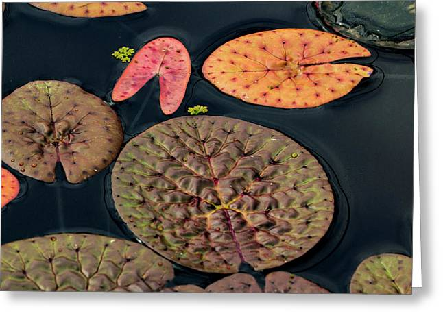 Lily Pad Abstract Greeting Card