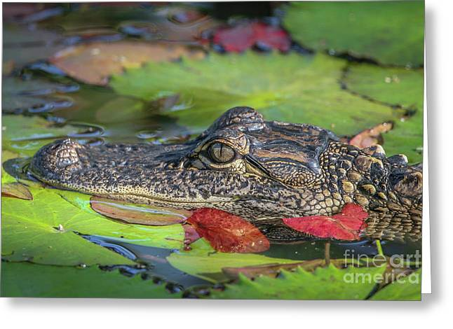 Lily Pad Gator Greeting Card